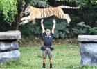 Harga Tiket Masuk Taman Safari Prigen Maret 2021
