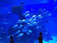 Wisata Jakarta Aquarium 200x150