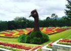 Harga Tiket Masuk Taman Bunga Nusantara Maret 2021