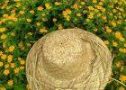 Rekreasi di Argowisata Kebun Bunga Begonia Lembang Pasti Seru dan Menyenagkan