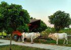 Tempat Wisata Baru Agrowisata Jawa Unik Di Klaten