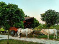 Agrowisata Jawa Unik Di Klaten 200x150