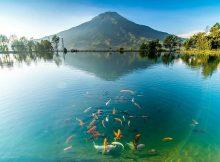 Embung Kledung Wisata Alam Temanggung Dengan View Serasa Di Jepang
