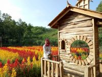 Kebun Bunga Celosia Gunung Kidul 200x150