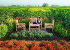 Wisata Hits Kebun Bunga Resoinangun Garden Jogja