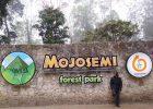 Informasi Wisata Beserta Harga Tiket Masuk Mojosemi Forest Park Maret 2021