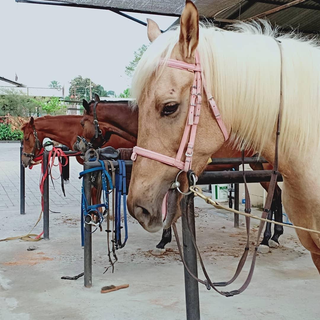 Belajar Berkuda Di Jogja